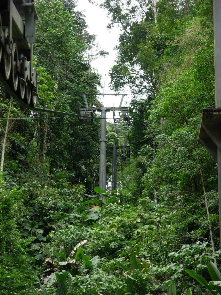 Rainforest Tram